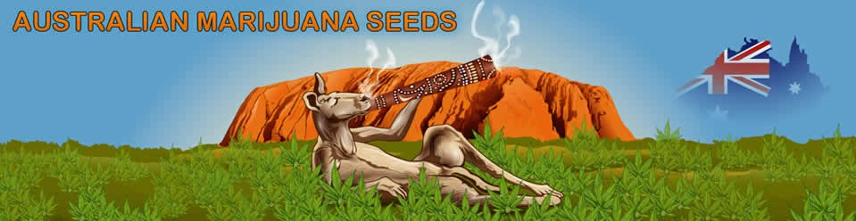 Aussie Marijuana Seeds Bank